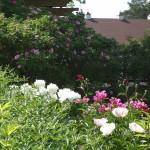 Layered Planting