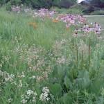 Prairie Planting after 5 Years