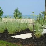 Plantscapes