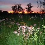 Prairiescapes